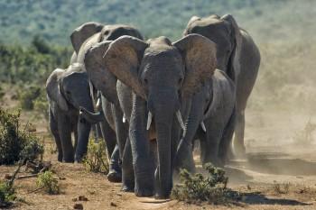 Addo Elephant Park, Elefanten, Safari, Garden Route Tour