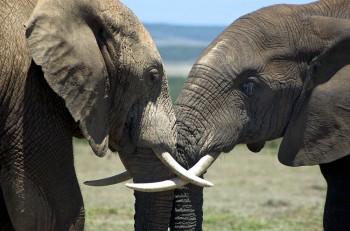 Addo, Elephant, Park, Safari, Elefanten