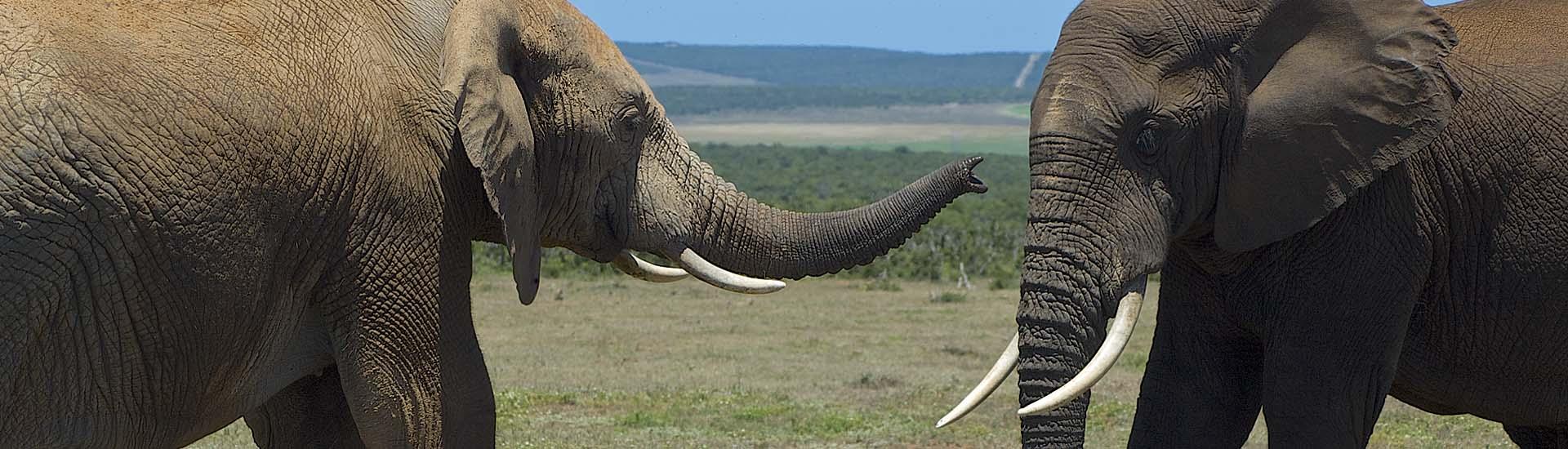 Addo Elephant Park, Elefant, Elefanten, Safari