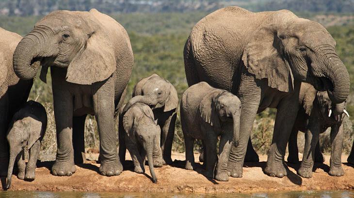 Addo Elephant Park, Elefanten, Safari