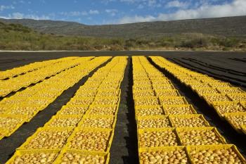 Trockenobst, Montagu, Kleine Karoo